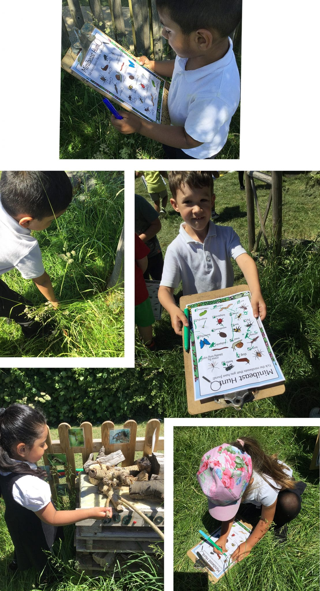 Searching for minibeasts